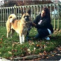 Adopt A Pet :: Kita - East Amherst, NY