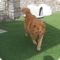 Adopt A Pet :: Tabitha - white settlment, TX