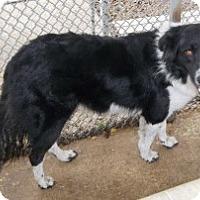 Adopt A Pet :: Pancho - Lockhart, TX