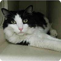 Adopt A Pet :: Oden - Mesa, AZ