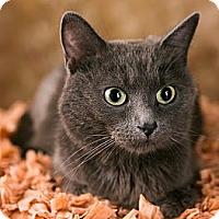 Adopt A Pet :: Kennedy - Eagan, MN