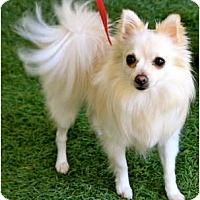 Adopt A Pet :: Dandelion - Mission Viejo, CA