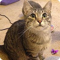 Adopt A Pet :: Perseus - St. Louis, MO