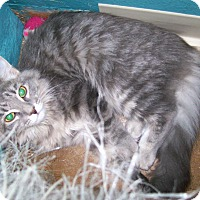 Adopt A Pet :: Ms. Beasley - Scottsdale, AZ