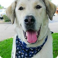 Adopt A Pet :: Koda, water dog - Sacramento, CA