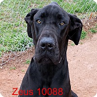 Adopt A Pet :: Zues - baltimore, MD