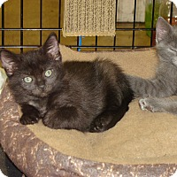 Adopt A Pet :: KC - Grayslake, IL
