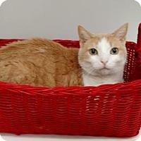 Adopt A Pet :: 1512-1518 Leo - Virginia Beach, VA