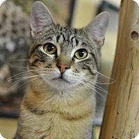 Adopt A Pet :: Kyle - Los Angeles, CA