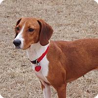 Adopt A Pet :: Penelope - Media, PA