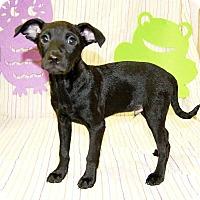 Adopt A Pet :: Tenacious - Modesto, CA