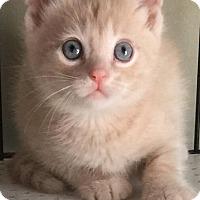 Adopt A Pet :: Sur - Island Park, NY