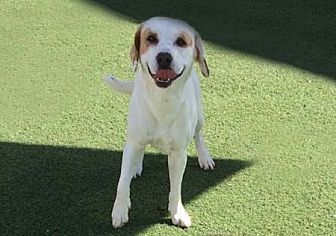 Beagle/Hound (Unknown Type) Mix Dog for adoption in Irvine, California - Jake