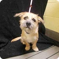 Adopt A Pet :: *TINKER - Upper Marlboro, MD