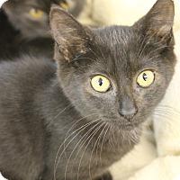Adopt A Pet :: Simone - Medina, OH