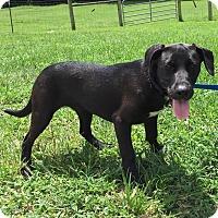 Adopt A Pet :: Beamer - Allentown, PA
