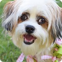 Adopt A Pet :: Roxy - Colorado Springs, CO
