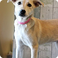 Adopt A Pet :: Sunny - Waldorf, MD
