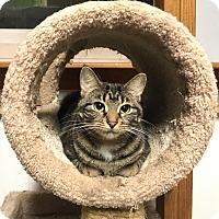 Adopt A Pet :: Tampa - Lombard, IL