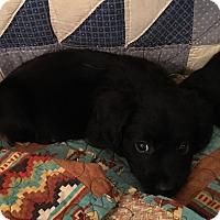 Adopt A Pet :: Spuds - Boerne, TX