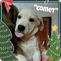 Adopt A Pet :: Comet (Pending Adoption) - Seaford, DE
