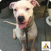 Adopt A Pet :: Olaf - Eighty Four, PA