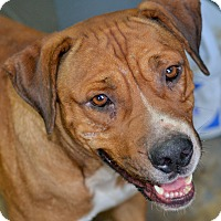 Adopt A Pet :: Saxon - Hazlehurst, GA