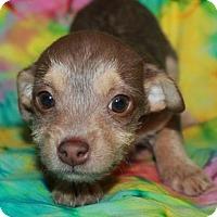 Adopt A Pet :: CB - Phelan, CA