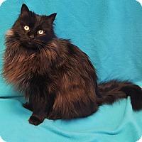 Adopt A Pet :: Kit - Colorado Springs, CO