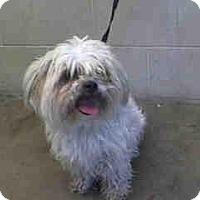 Adopt A Pet :: Sprout - Anaheim, CA