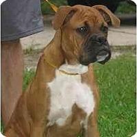 Adopt A Pet :: Tristan - Thomasville, GA