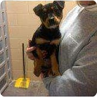 Adopt A Pet :: Addie - Alliance, NE