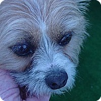 Adopt A Pet :: Iris - Ogden, UT