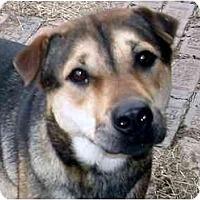 Adopt A Pet :: Reeses - New Kensington, PA