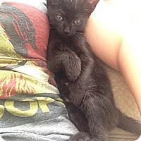 Adopt A Pet :: Lola - Redondo Beach, CA