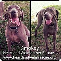 Adopt A Pet :: Senior Smokey - Omaha, NE
