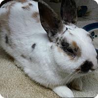 Adopt A Pet :: Oliver - Williston, FL