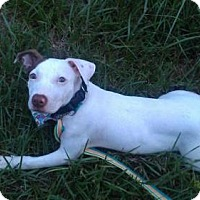 Adopt A Pet :: Xena - Satellite Beach, FL