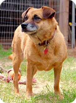 Terrier (Unknown Type, Medium) Mix Dog for adoption in San Antonio, Texas - Nora