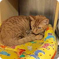 Adopt A Pet :: Colorado - Colmar, PA