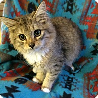 Adopt A Pet :: Earline - Chattanooga, TN