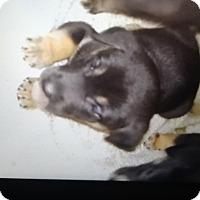 Adopt A Pet :: Sheeba - springtown, TX