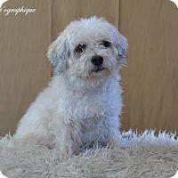 Adopt A Pet :: Parker - Henderson, NV