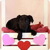 Adopt A Pet :: Dude - Waldorf, MD