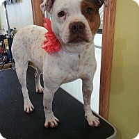 Adopt A Pet :: Vesta - Garden City, MI