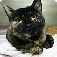 Adopt A Pet :: Liza - Austin, TX