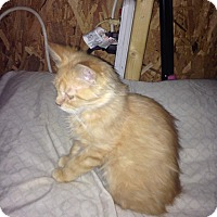 Adopt A Pet :: Katniss - Mount Perry, OH