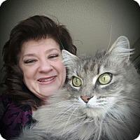 Adopt A Pet :: Fluffy - Yorba Linda, CA