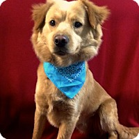 Adopt A Pet :: Stetson - Thomspn, CT