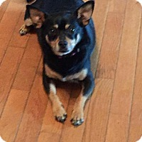 Adopt A Pet :: Daisy - Johnson City, TN